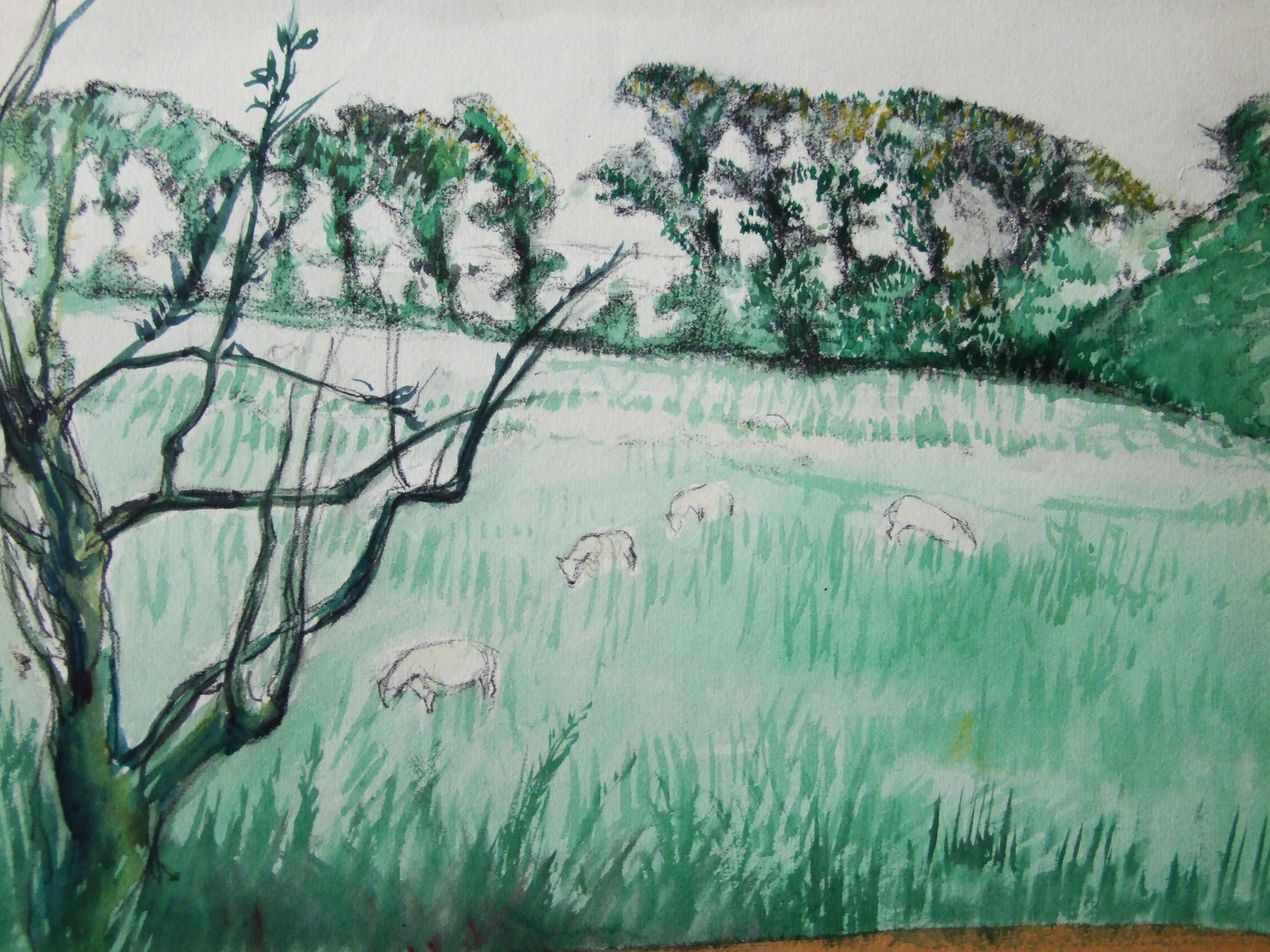 Watercolours Finished And Unfinished Graham Walsh